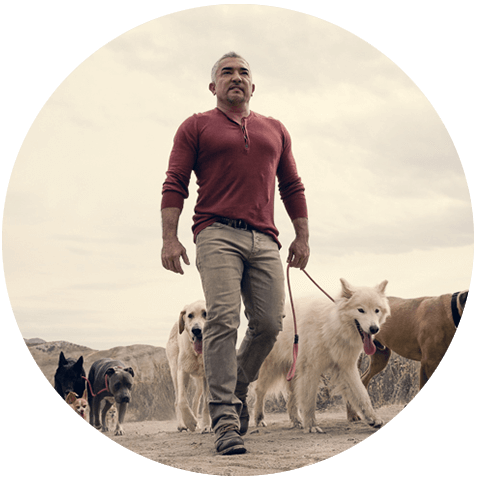 Win Win a trip to Los Angeles to meet Cesar Millan and tour his Dog Psychology Center